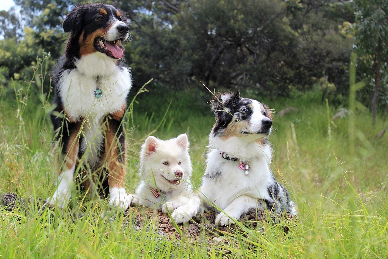 如何讀懂狗狗的肢體語言