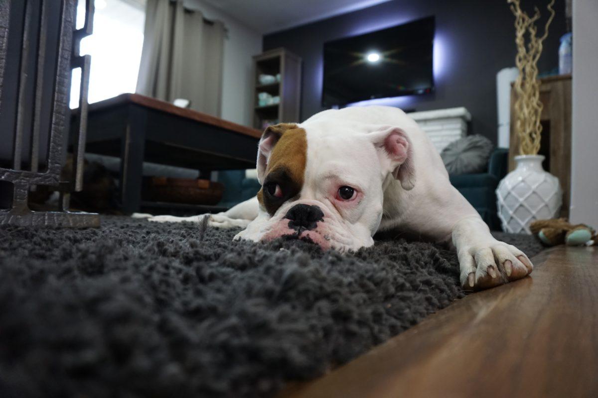 下雨天也要活動/記得穿狗狗雨衣/室內嗅聞遊戲不無聊