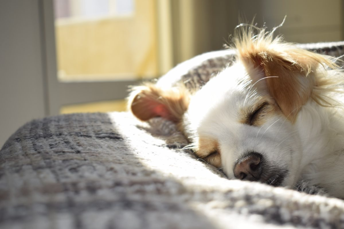 看著你熟睡的臉龐,原來是最幸福的事